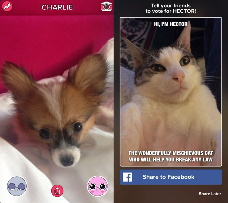 0225 cuteornot 730x652 Buzzfeed launches its first experimental app which naturally is about cute animals