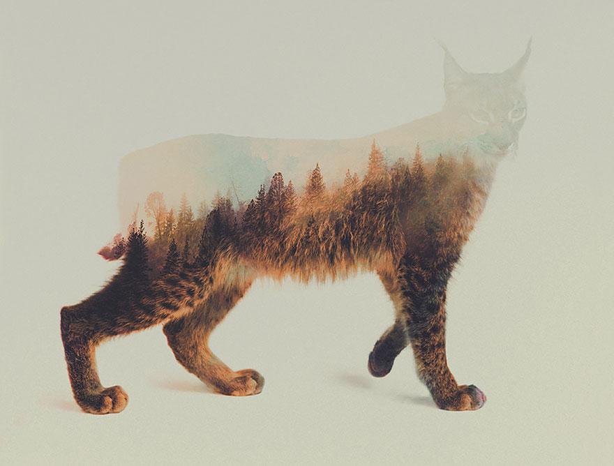 Double-Exposure Animal Portraits By Norwegian Photographer [Bored ...