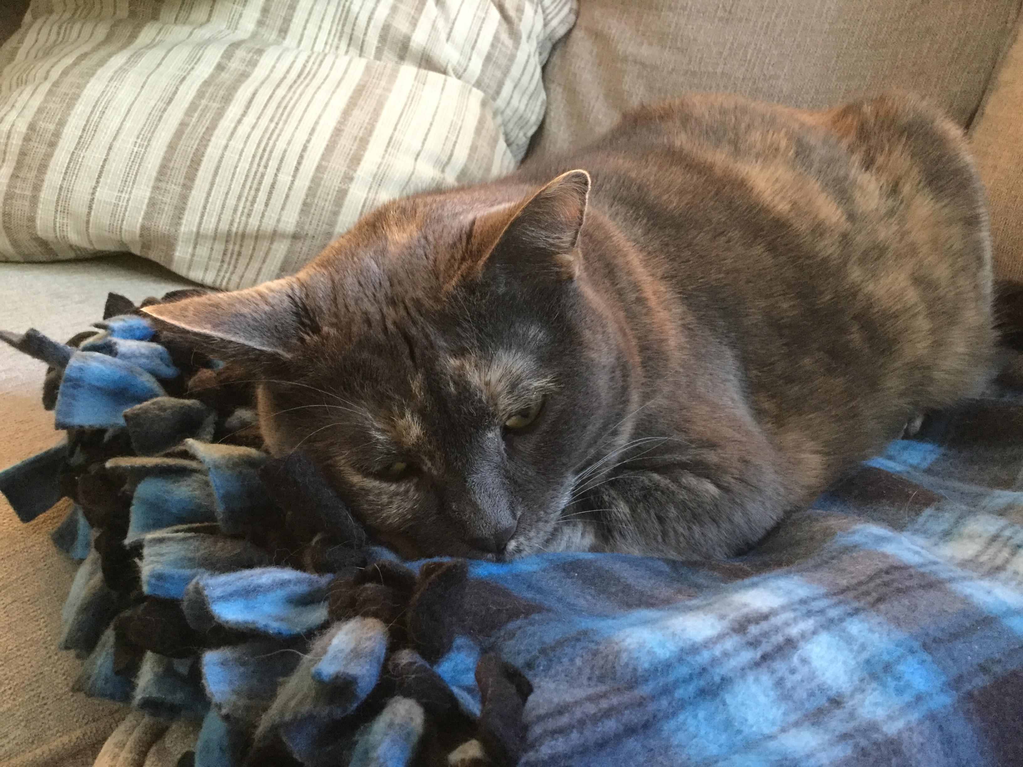 The lazy, lazy cat