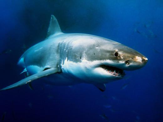 shark, entrepreneur, getting ahead