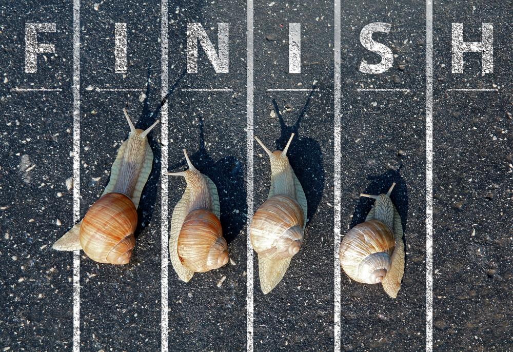 snail race, snail pace, slow, finish line