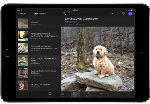 puppy-in-iPad-520x520