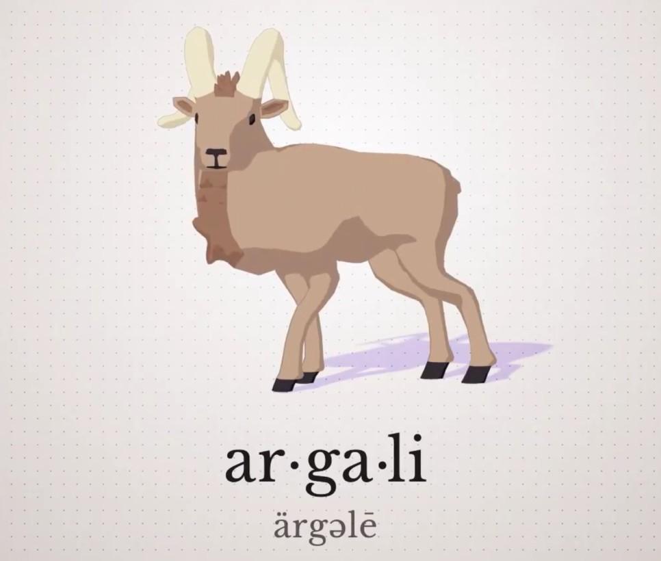 Argali!