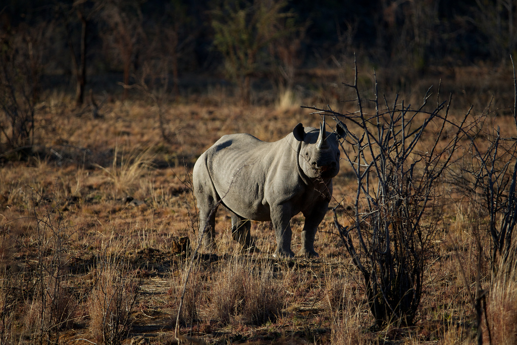Using AI and Drones to Combat Elephant and Rhino Poaching